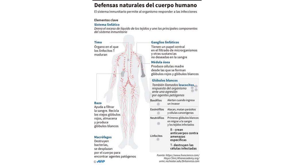 defensas_cuerpo_coronavirus